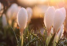 Найкрасивіші цитати про весну для вашого натхнення!