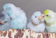 Ніжність в пастельних тонах: фотохудожниця показує красу тварин по-особливому