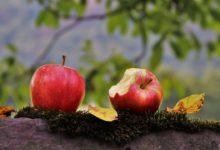 Як не з'їм, то понадкушую: як навчитись менше їсти восени
