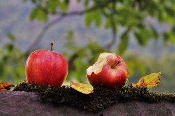 як навчитись менше їсти