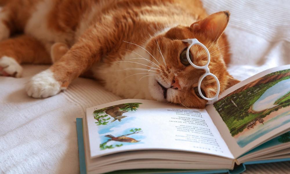 кіт в окулрах, книга
