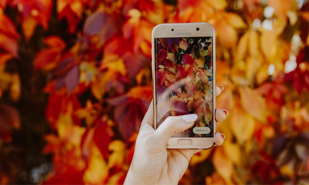 мобільний телефон фотографує жовте листя