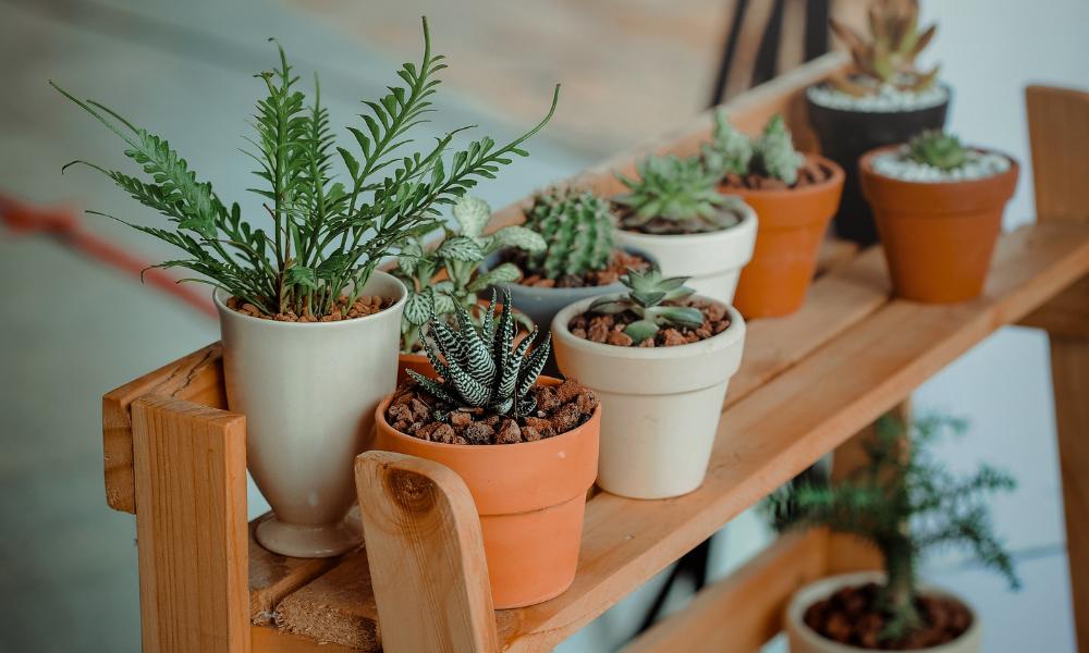 зелень, кімнатні рослини, вазони
