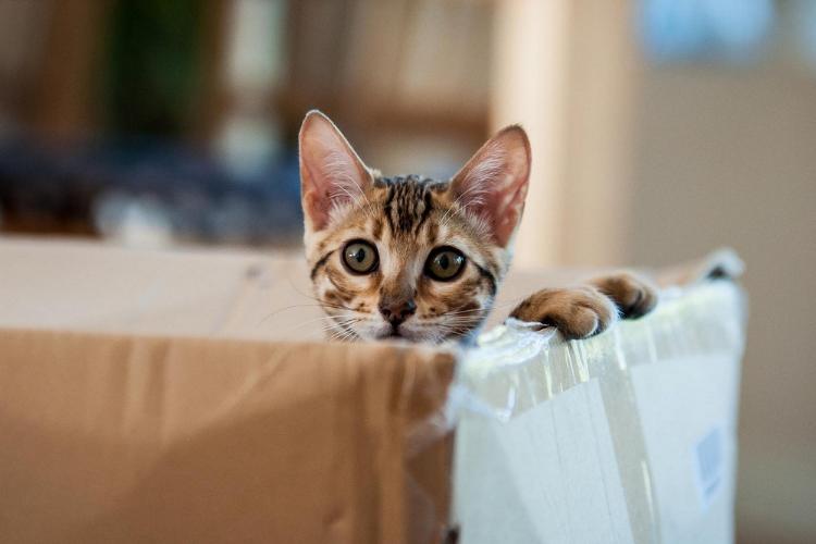 кіт в коробці, котик, киця