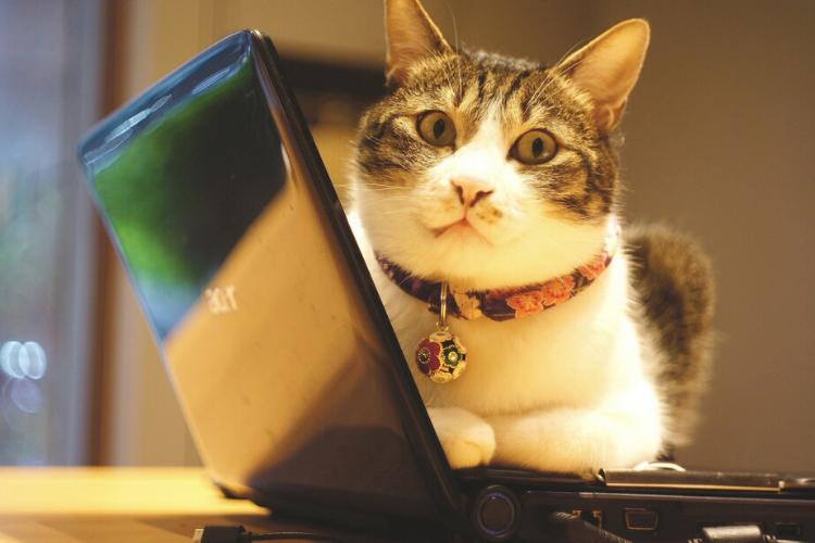 кіт, офіс, ноутбук