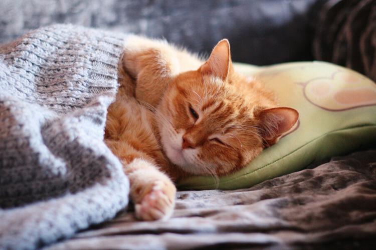 кіт, сон, спить