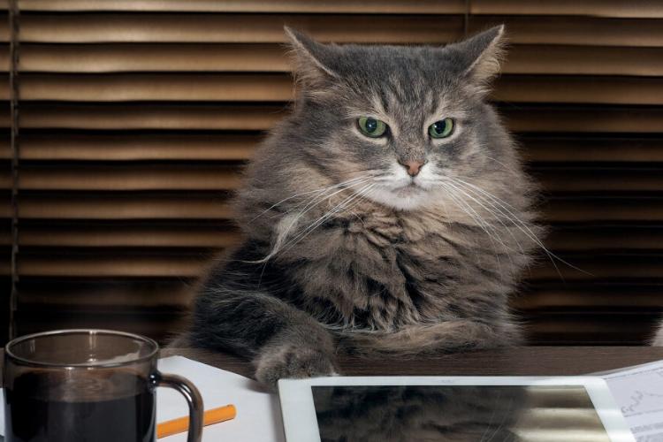 кіт, офіс
