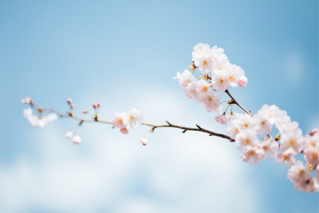 весняне цвітіння