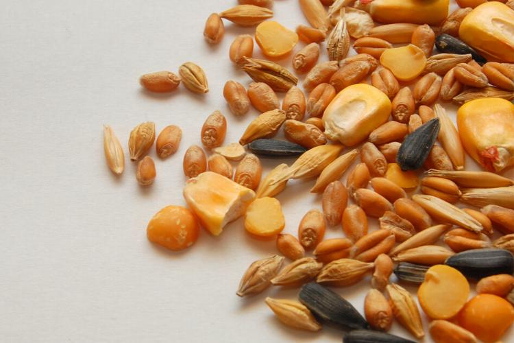 антистресові продукти, зерно, овес