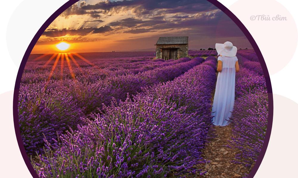 жінка, лавандове поле, захід сонця
