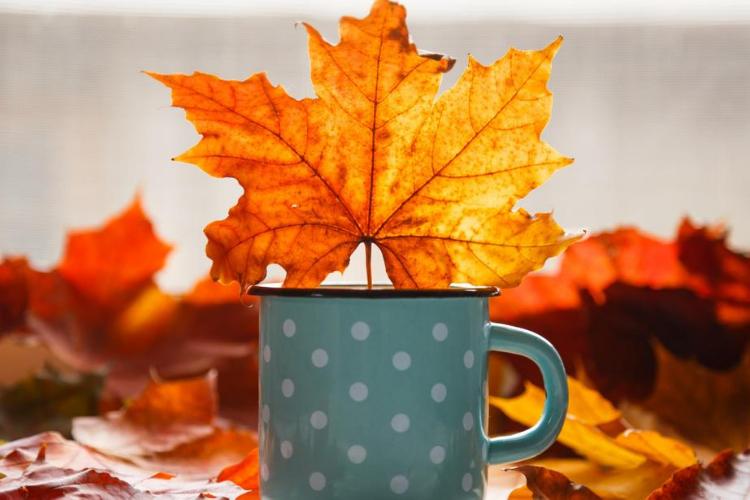 листок, кружка, осінь