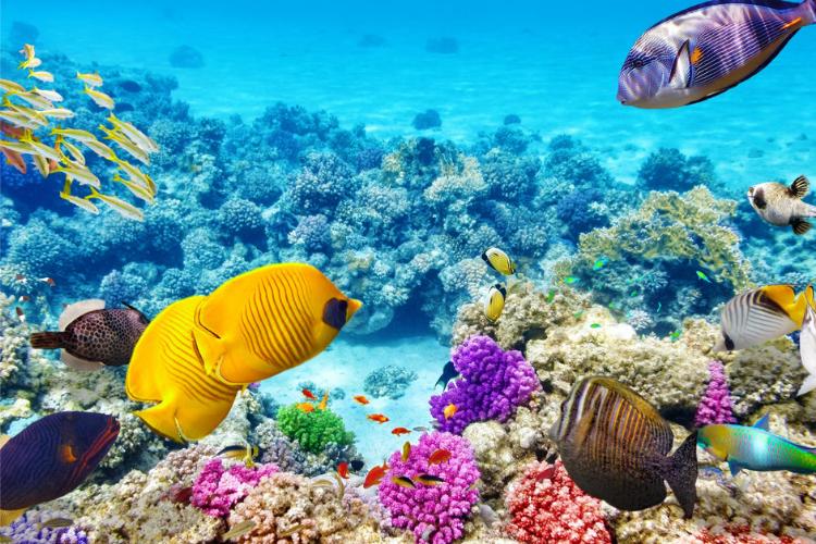 Коралове море, Найкрасивіші моря світу