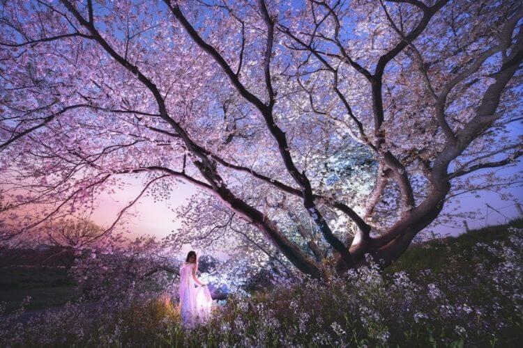весна, дерево, цвітіння