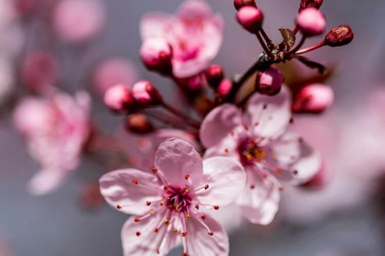 весна, цвітіння