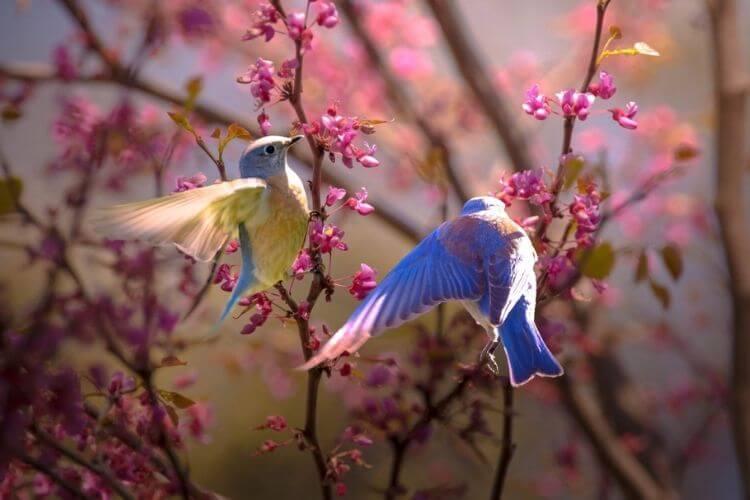 весна, пташки