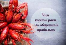 Корисні й смачні: як обрати і де купити раки з доставкою в Києві
